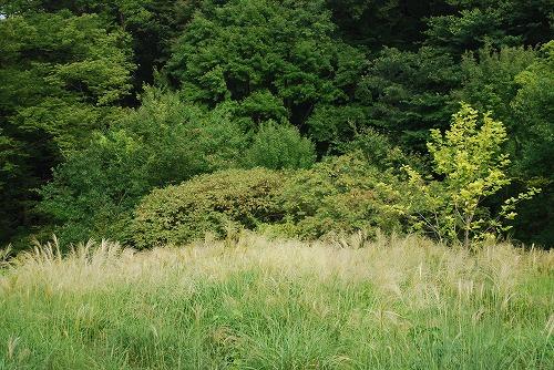 狭山公園ガイドウォーク_c0124100_23561572.jpg