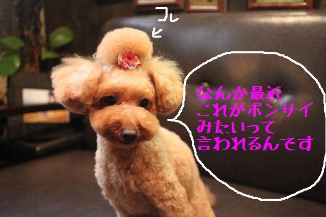 本日と明日は「定休日」ですので、お休みとなります!!_b0130018_822688.jpg