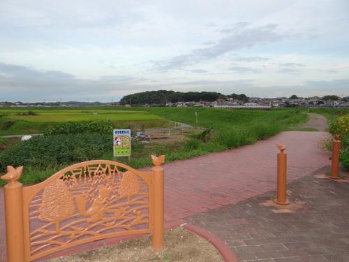 矢勝川の彼岸花の状況と家の庭_d0254540_20291727.jpg