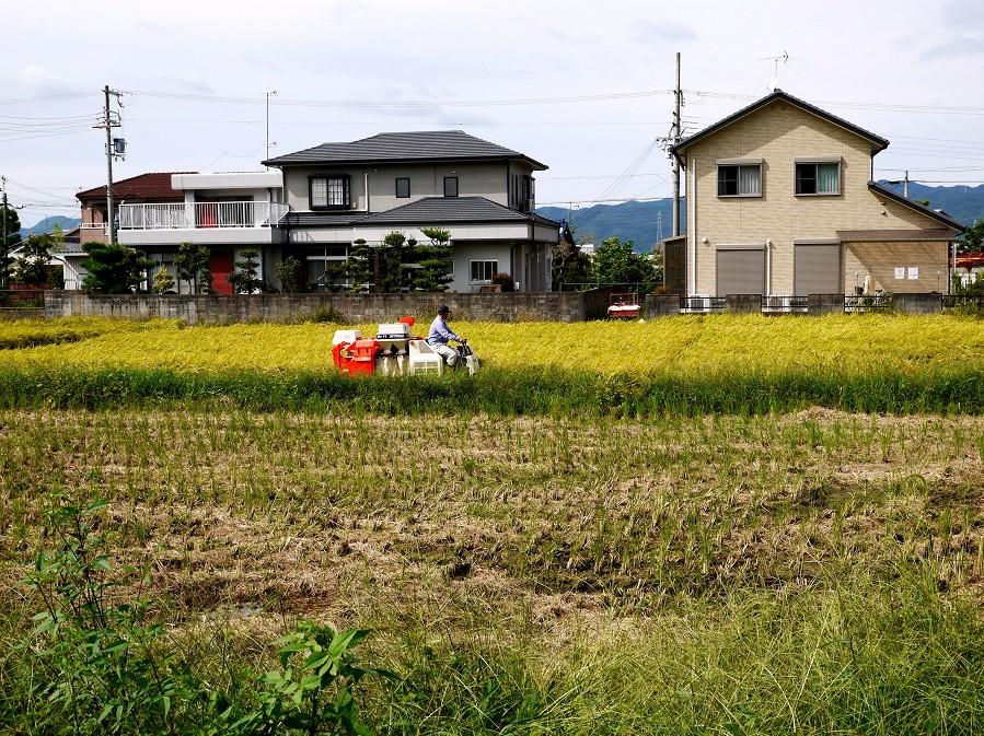 田園風景_b0093754_22384670.jpg