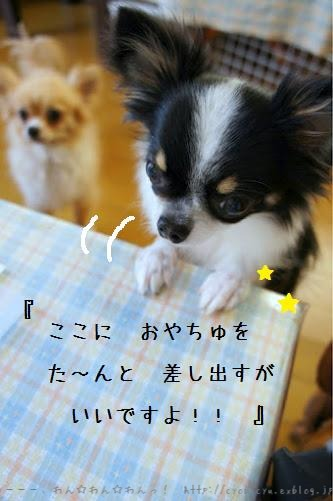 b0112758_2033027.jpg
