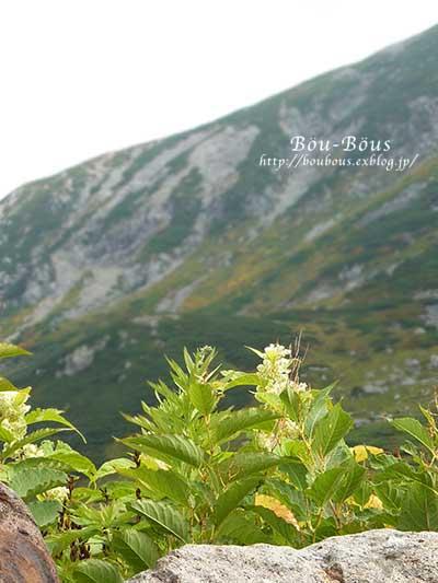 立山黒部アルペンルートその3_d0128697_004824.jpg