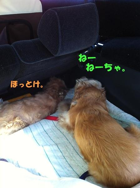 サラっぴ的マイブーム_b0067012_20275896.jpg