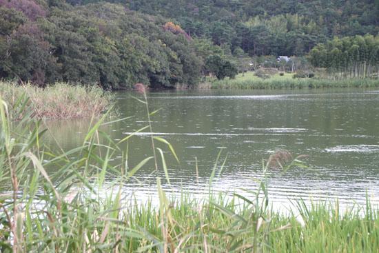 嵯峨野 収穫の盛り_e0048413_2051151.jpg