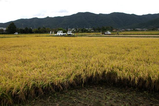 嵯峨野 収穫の盛り_e0048413_20513920.jpg