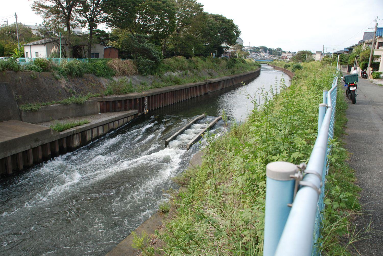 市民病院裏の川で_c0162128_0463396.jpg