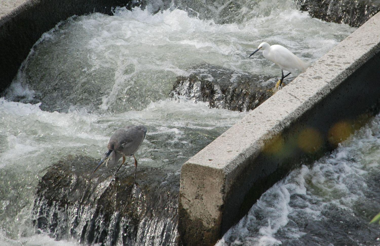 市民病院裏の川で_c0162128_0493567.jpg