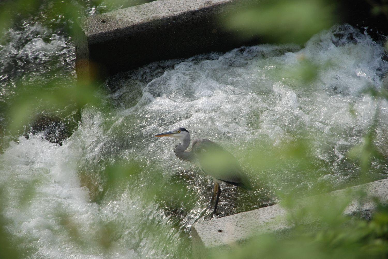 市民病院裏の川で_c0162128_0534088.jpg