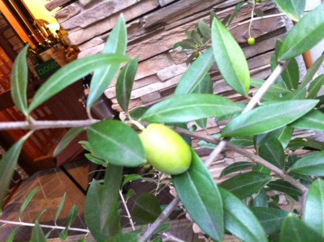 9月27日(木)のランチメニュー&実りの秋ですね。_d0243849_23303728.jpg