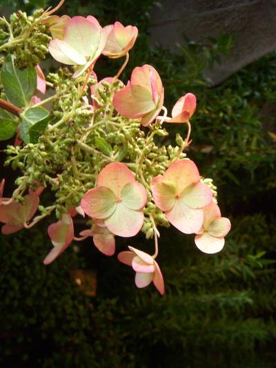 秋のピンク。。。_a0229658_1034384.jpg