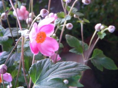 秋のピンク。。。_a0229658_1054555.jpg