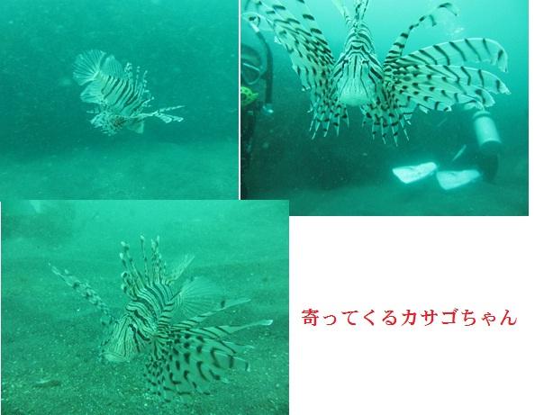 f0110488_14304944.jpg
