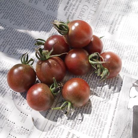 収穫_a0292194_1111922.jpg