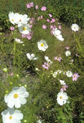 秋の花を撮ってきました。_f0227395_13464778.jpg