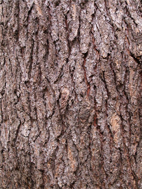 樹皮の美コレクション 蚕糸の森 ...