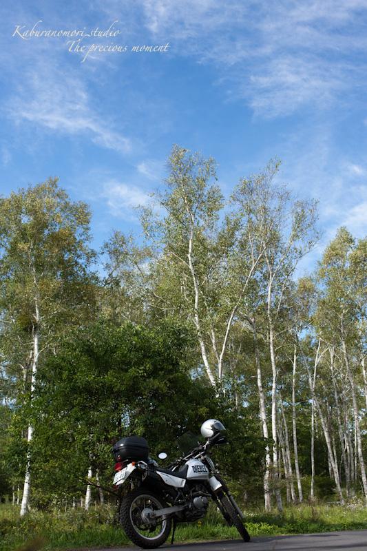 初秋の原村白樺林と秋の空_c0137403_18503326.jpg