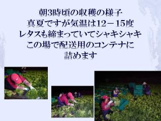 f0070004_1418032.jpg