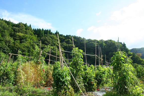 「蒜山耕藝」に行ってきました。_d0225610_20103497.jpg