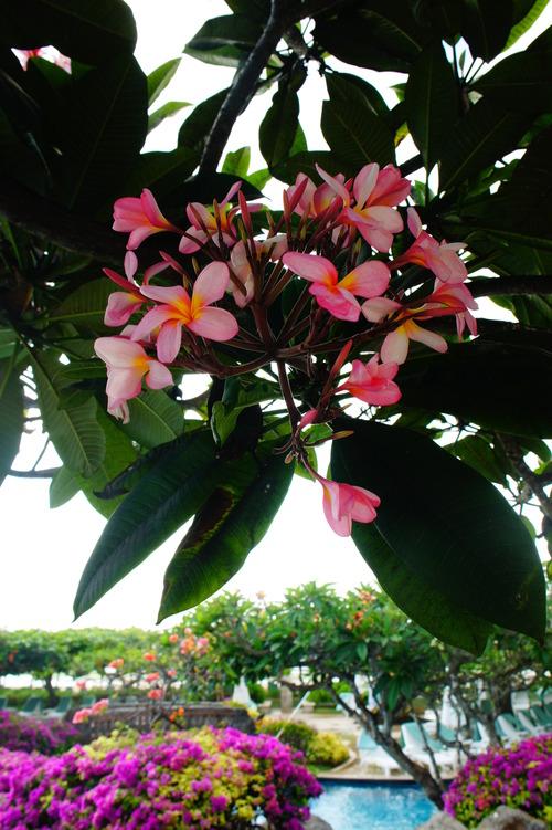 バリ島へ行ってきました!_f0215714_1671996.jpg