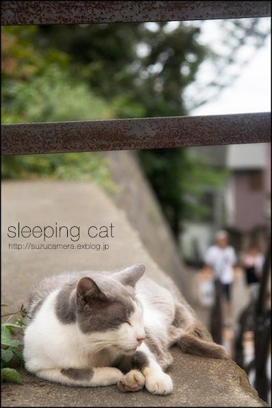 マイペースな眠り猫_f0100215_0213026.jpg