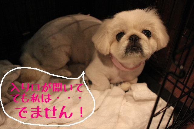 調子いいねぇ~!!_b0130018_2232061.jpg