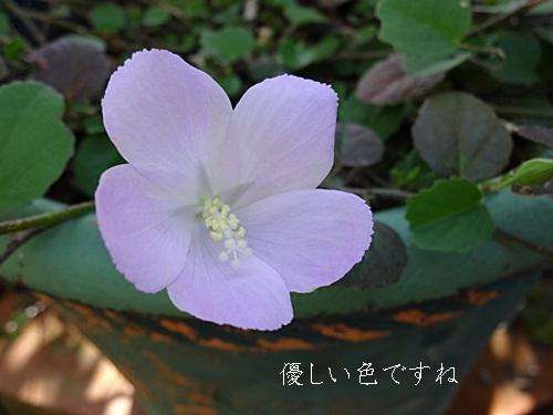 a0067720_20124189.jpg