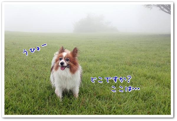 d0013149_23201668.jpg