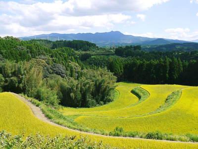 菊池水源棚田米 最高の水で育ったお米!まもなく稲刈り!!_a0254656_17221981.jpg