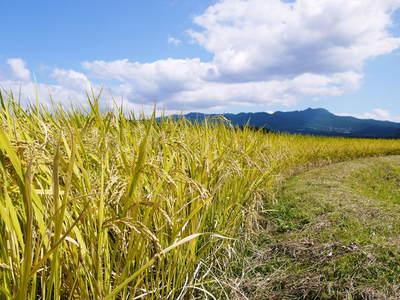 菊池水源棚田米 最高の水で育ったお米!まもなく稲刈り!!_a0254656_1731415.jpg