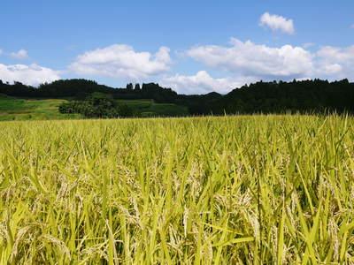 菊池水源棚田米 最高の水で育ったお米!まもなく稲刈り!!_a0254656_1892452.jpg