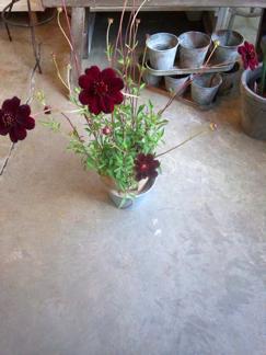 今週の鉢物さん_b0209477_1633571.jpg