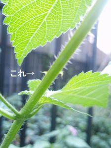 f0172093_17121974.jpg