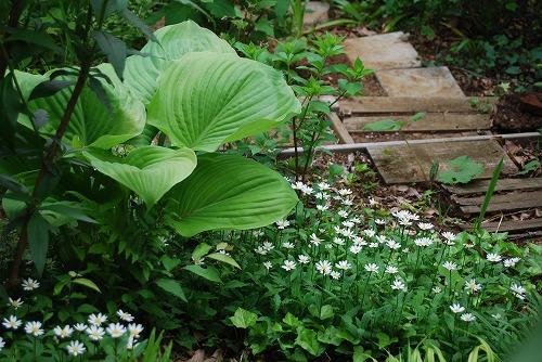 5月の庭…_c0124100_13542516.jpg