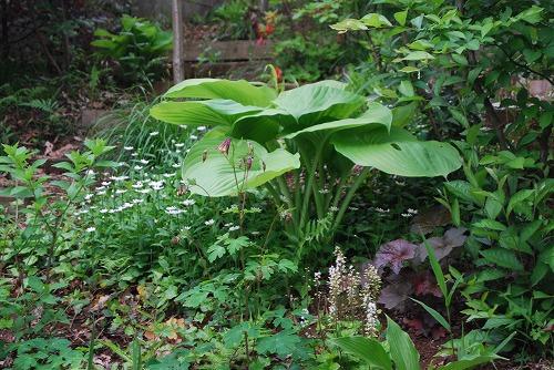 5月の庭…_c0124100_13543693.jpg