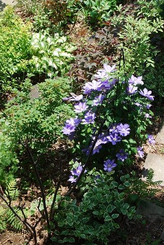 5月の庭…_c0124100_1354797.jpg