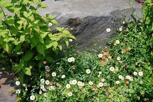 5月の庭…_c0124100_13551665.jpg