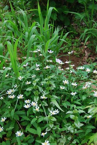 5月の庭…_c0124100_13553097.jpg