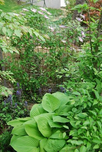 5月の庭…_c0124100_13555867.jpg
