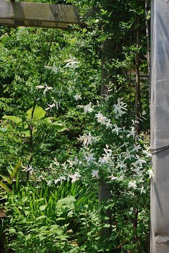 5月の庭…_c0124100_1355622.jpg