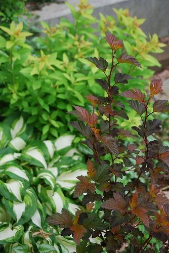 5月の庭…_c0124100_13561542.jpg