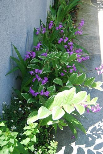 5月の庭…_c0124100_1356489.jpg