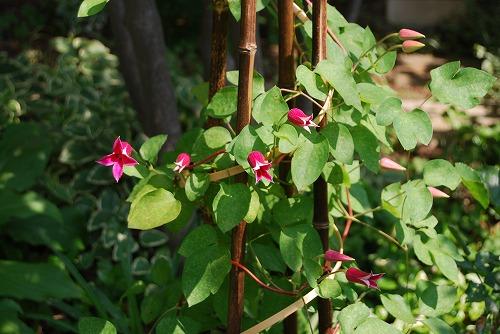 5月の庭…_c0124100_13571737.jpg