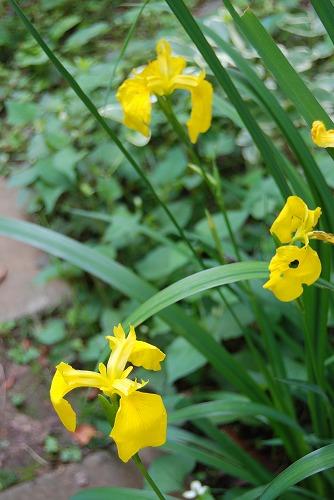 5月の庭…_c0124100_13573830.jpg