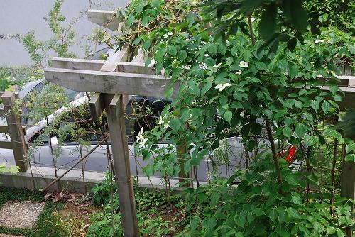 5月の庭…_c0124100_1357598.jpg