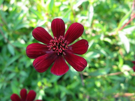 秋の庭_f0129726_2146375.jpg