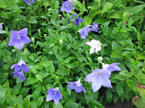 秋の庭_f0129726_21473768.jpg