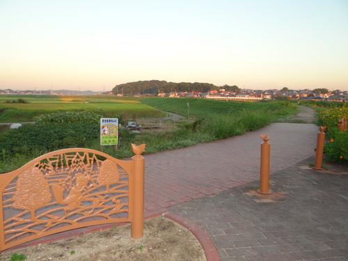 矢勝川の彼岸花の状況と家の庭_d0254540_184514.jpg
