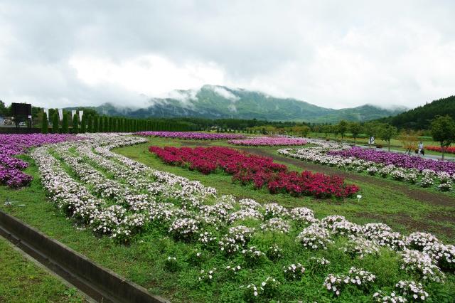 山中湖&花の都公園  山梨・その6_b0112443_20532256.jpg