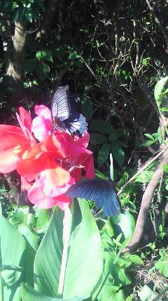 蝶が飛ぶ穏やかな〜_d0051146_22291789.jpg