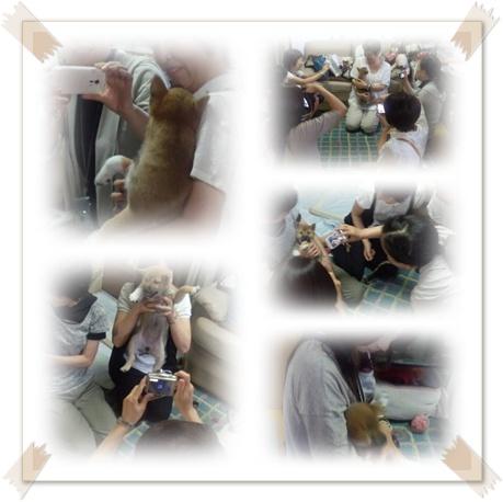 幼犬璃子は元気いっぱい_c0049950_0105377.jpg